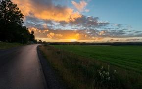 Картинка цветы, road, широкоэкранные, дорога, HD wallpapers, обои, дерево, sunset, trees, зелень, полноэкранные, растительность, солнце, background, ...