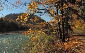 Картинка деревья, река, ветви, листва, Осень, дорожка, river, trees, autumn, leaves, path, fall