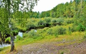 Картинка лес, лето, река, береза, кустраник