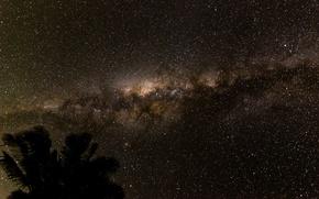 Картинка космос, звезды, ночь, пространство, пальма, силуэт, млечный путь