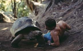 Обои That was a big discussion, David Olkarny, черепаха, парень