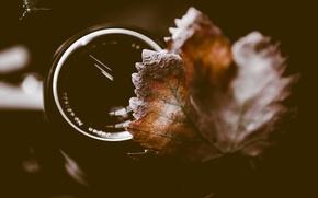 Обои осень, макро, лист, обьектив
