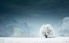 Обои Дерево, снег, горы, зима