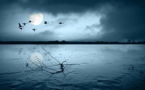 Обои грусть, птицы, луна, ветка, 149