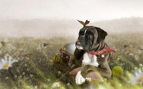 Картинка животные, бабочки, цветы, насекомые, природа, мяч, собака, шлем, ретушь