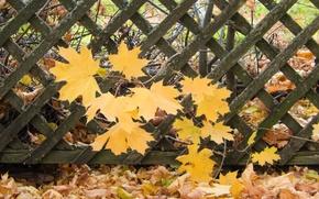 Картинка листья, лист, widescreen, обои, забор, wallpaper, клен, широкоформатные, background, обои на рабочий стол, полноэкранные, HD …