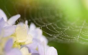 Обои фото, макро, паутина, цветок, капли