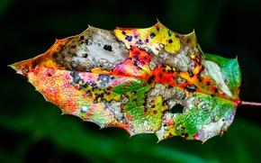 Картинка осень, лист, цвет
