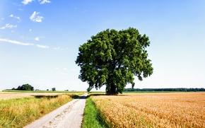 Картинка дорога, поле, облака, рожь, Дерево, nature, clouds, tree, sun, lonely tree, Солнечный день