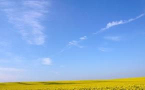 Обои цветы, Желтое, небо, поле