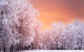 Картинка зима, деревья, природа