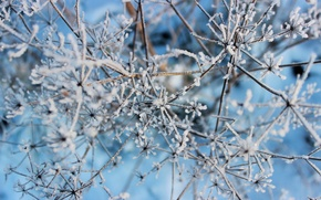 Обои зима, макро, снег, природа, ветка