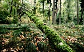 Обои ветка, трава, мох, лес