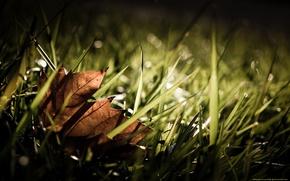 Картинка Листок, Трава, Осень, Fall, Grass