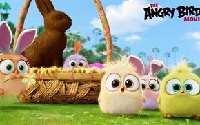 Картинка мультфильм, шоколад, птички, корзинка, зайчик, Angry Birds Movie