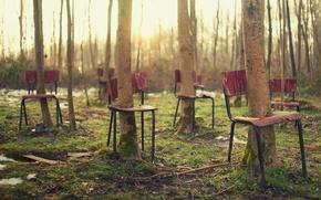 Картинка лес, деревья, стулья, ситуация