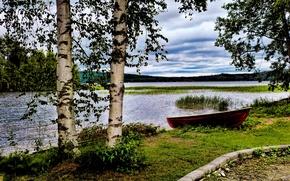 Картинка трава, озеро, камыши, берег, лодка, берёзы