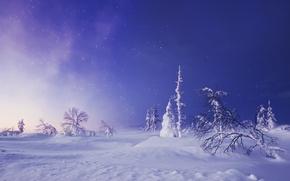Картинка зима, снег, деревья, сугробы, Финляндия, Finland, Lapland, Лапландия, звёздное небо