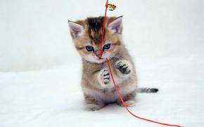 Обои взгляд, красный, котенок, лапы, рыжий, шнурок, играет, голубоглазый