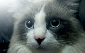 Картинка глаза, кот, взгляд, cat