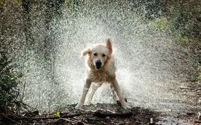 Картинка вода, капли, брызги, собака