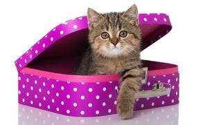 Обои кошка, взгляд, чемодан, котёнок