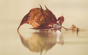 Картинка water, autumn, leaves, reflection