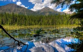Картинка лес, небо, облака, деревья, горы, озеро, сша, glacier national park, montana