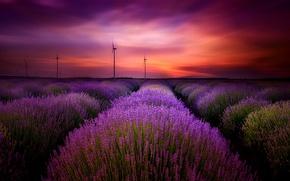 Картинка небо, облака, пейзаж, закат, цветы, природа, лаванда