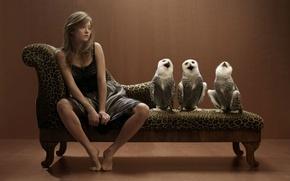 Обои bird, animal, cute