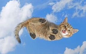 Обои кот, хвост, котенок, облизывает экран, лапы, язык