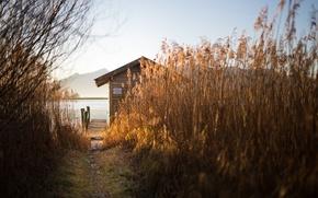 Картинка озеро, дом, камыш