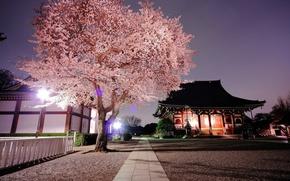 Картинка вечер, Япония, сакура, храм, Japan