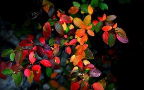 Картинка осень, листья, ветки, фон, куст