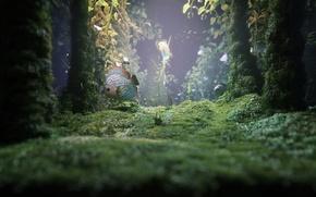 Картинка водоросли, растение, дно, Рыба
