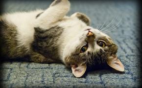 Картинка кошка, глаза, взгляд, лежит, смотрит
