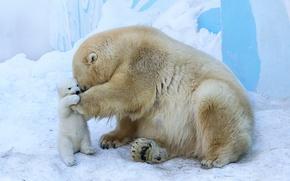 Картинка медвежонок, медведица, материнская любовь