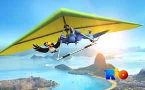 Обои птицы, мультфильм, Рио