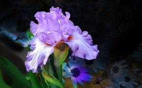 Обои цветок, линии, ирис, лепестки, краски, макро