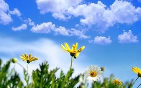 Картинка цветы, природа