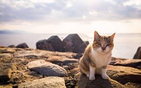 Обои кот, взгляд, лето
