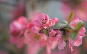 Картинка цветы, краски, ветка, лепестки, сад