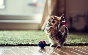 Обои игрушка, игра, котёнок