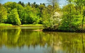 Обои сша, река, лето, randall ohio, деревья