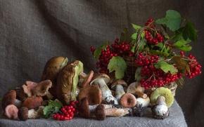 Обои ягоды, грибы, осень, калина