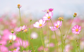 Картинка цветы, нежность, красота, обои для рабочего стола, широкоформатные обои, широкоэкранные обои, лепесток, свежесть, цветение, скачать ...