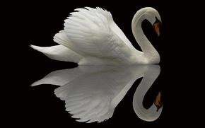 Картинка лебедь, отражение, фон, птица