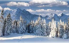 Картинка зима, лес, небо, облака, горы, природа, красиво