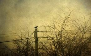 Картинка стиль, фон, птица