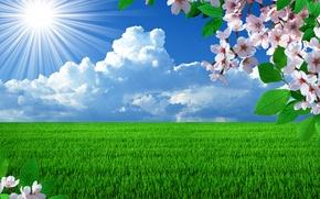 Картинка поле, солнце, ветки, вишня, весна, цветение